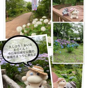 カンカン帽と紫陽花とおのくん!