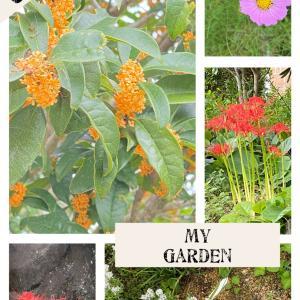 秋の花たちと