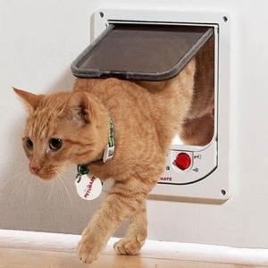 獣医師が考える猫の環境エンリッチメント⑦ 猫ドアを取り付けよう!