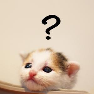 子猫の医学① 子猫の年齢の調べ方