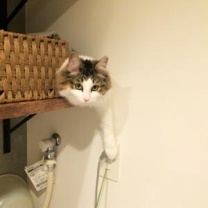 獣医が考える猫の環境エンリッチメント⑥ 猫のお気に入りの場所を作る