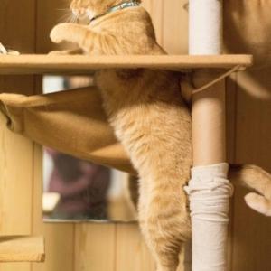 猫の環境エンリッチメント⑤ キャットタワーを取り入れよう!
