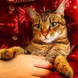 猫の喉の「ゴロゴロ音」を徹底解明③ 猫のゴロゴロ音は高血圧治療薬?