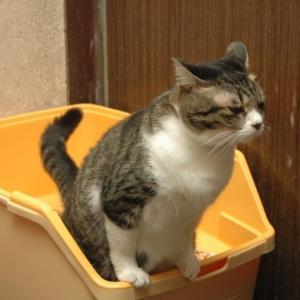 獣医が考える猫の環境エンリッチメント③ 猫トイレの重要性とその選択/位置/注意点