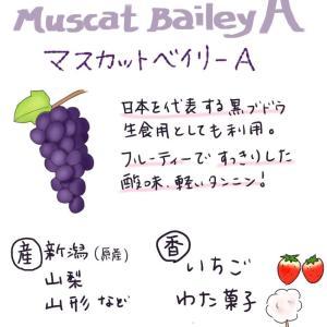 [ブドウの品種]マスカット・ベイリーA