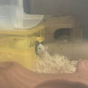 パンダマウス、2歳1ヶ月!