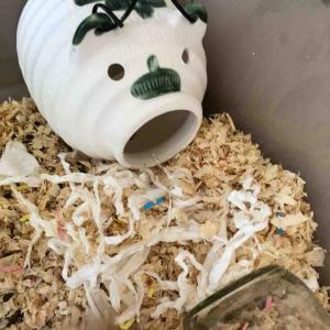 キンクマハムスター、蚊取り豚に交換