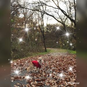 落ち葉で埋め尽くされた落ち葉の散歩道