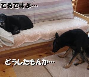 ソファの下には…