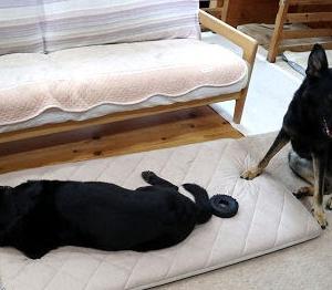 枕使い vs コング使い