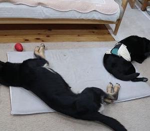 ひとり遊び、ひとり寝