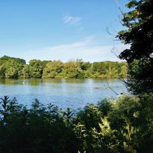ここ最近のロンドンはとても暑いので池に泳ぎに行ってきました