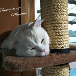 ダニアレルギー〜うちの猫