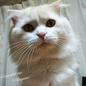 うちの猫(ΦωΦ)