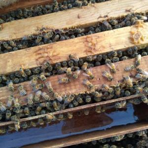 ミツバチたちと蜜蝋づくり