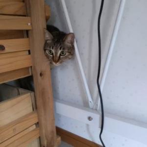 来客があった時の我が家のネコたち