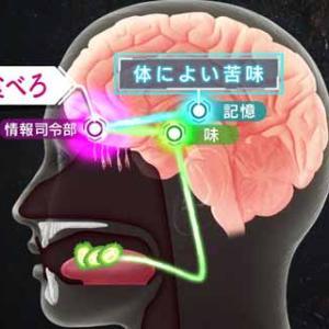 NHKスペシャル「食の起源」 第5集「美食」 2月23日放送