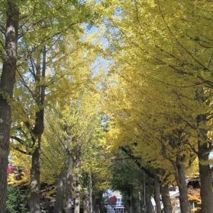 """秋の深まりを感じる""""イチョウ並木""""..."""