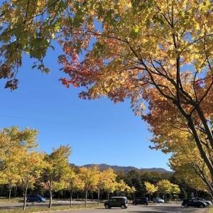 """""""四季の杜公園""""、紅葉が始まる..."""