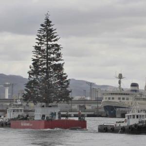 """今朝、""""巨大クリスマスツリー""""が到着..."""