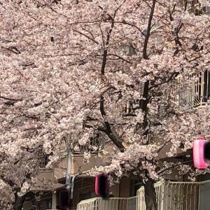 桜まつりと、もう来た固定資産税
