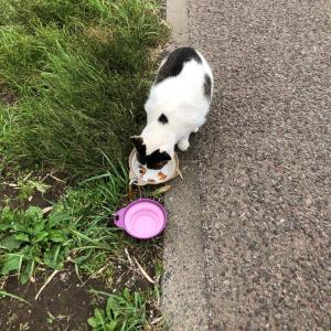新川の猫達と私の懸念事項