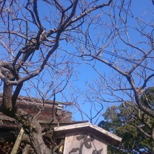 【森の生活団活動日記】1月①~初詣~光の道標を胸に♪@太宰府天満宮
