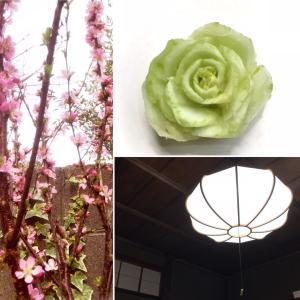 薔薇な青梗菜