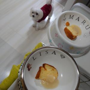 食後のデザートとダス犬♪