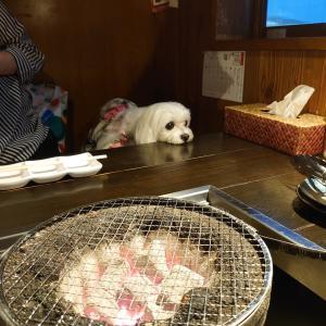 わんこ連れ焼き肉♪