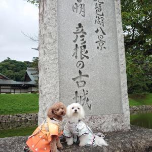 彦根城に行きました♪