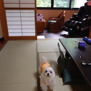 須賀谷温泉に泊まりました♪