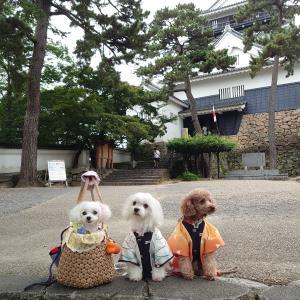 岡崎城へ行きました♪