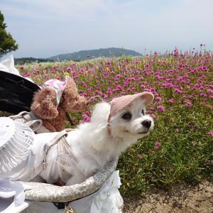 淡路島へ行きました♪
