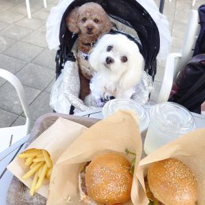 信州の旅♪ お買い物と犬連れディナー♪