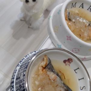 わんこのお魚ご飯♪ 気になる犬の健康♪