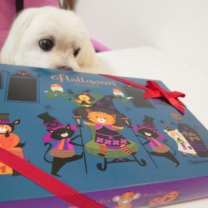 ハロウィーンのお菓子を頂きました♪