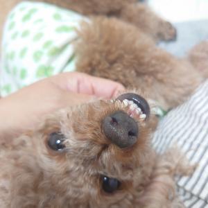 怖い顔! 激写!