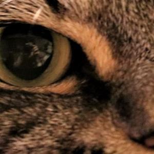 君の瞳に映っていた「猫君はいつも見ている」・偶然見つけた一枚の写真