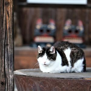 盛岡八幡宮を散歩と猫君達と「のり弁」の話