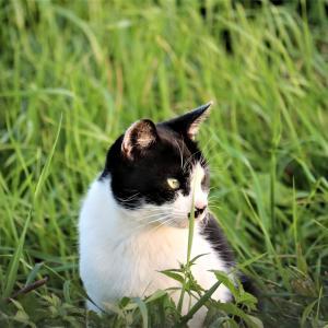今年も夏にさようなら、草原で出逢った一匹の猫