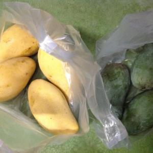 旬のマンゴー