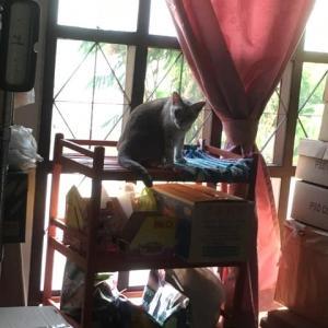 チビちゃんの見張り台