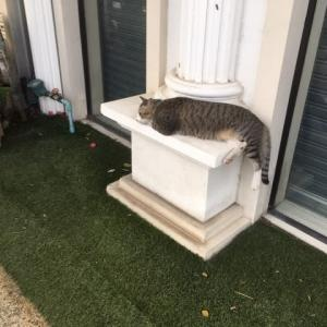その後のサービス精神旺盛な猫