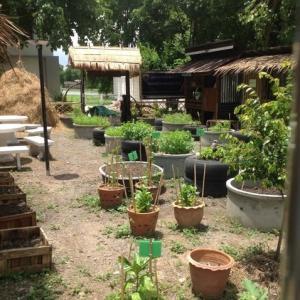 イミグレーションの菜園