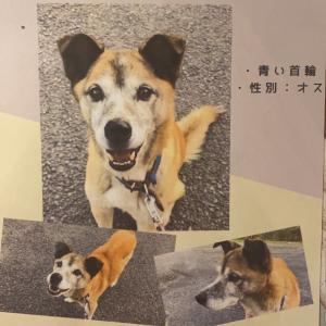 迷い犬、無事飼い主さん見つかりました〜!