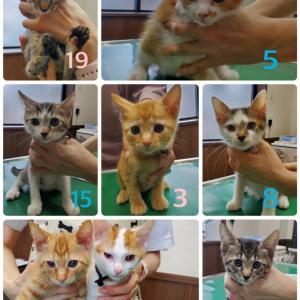 保護子猫14匹の1週間後、続々トライアルへ!