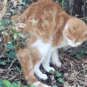 負傷猫保護しました