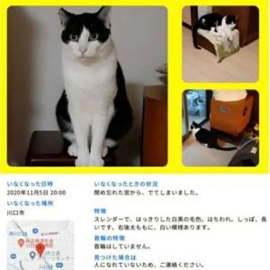 """""""【拡散希望】猫を探してます"""""""