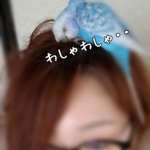 髪様が。。